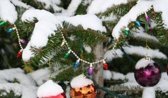 Inzameling oude kerstbomen