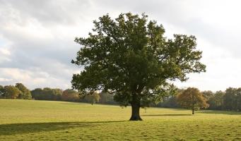 Heeft u de enquête bomenbeleid al ingevuld?
