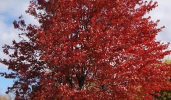 Nieuwe kansen voor de groene hoofdstructuur in Alphen