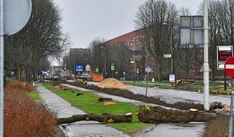 Gemeente start met bomenkap op Prins Bernhardlaan