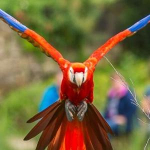 vogelpark-avifauna-pre-sale-2017-2pers-1.jpg