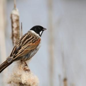 Vogels in Rivierenland