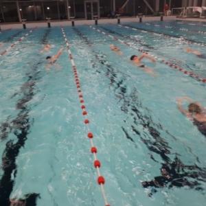 Koningszwemloop