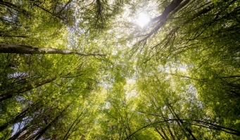 GroenLinks blij met komst van tiny forests in Alphen