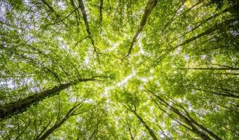 Leerlingen planten bomen in Tiny Forest in Alphen