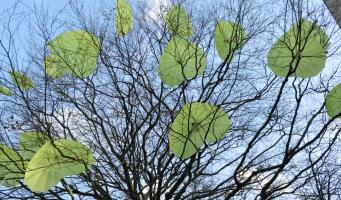 Bomenbeleid