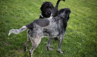 Zorgen over uitlaatplekken voor honden in Alphen