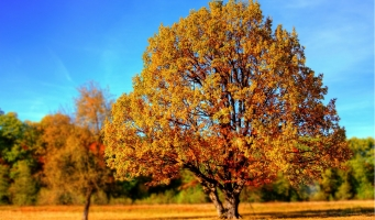 tree-99852_1280.jpg