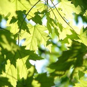leaves-291024_960_720.jpg