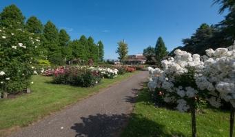 Rosarium aan de Parklaan in Boskoop