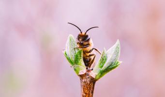 Bijenlandschap op zoek naar mooiste bijenfoto