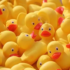 duck-meet-4127713_1280.jpg