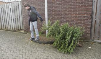 Kerstbomen ophalen Gemeente Alphen aan den Rijn