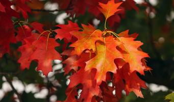 fall-foliage-3705550_1280.jpg